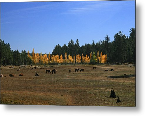 Landscape Metal Print featuring the photograph Fall In Line by Randy Oberg