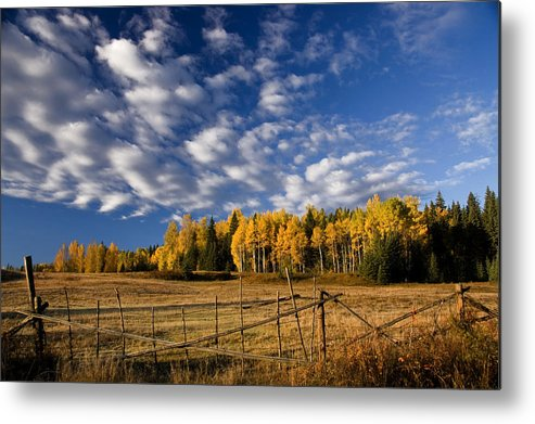 Fall Colours Metal Print featuring the photograph Fall In The Cariboo by Detlef Klahm