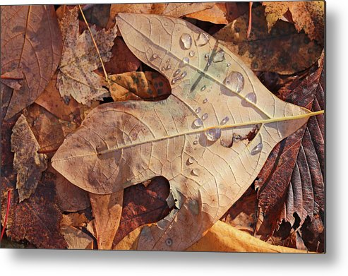 Fall Metal Print featuring the photograph Fall Leaves And Dew 8 2017 by Mary Bedy