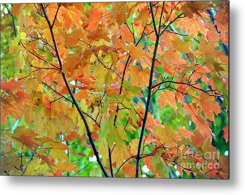 Linda Drown Metal Print featuring the photograph Fall Leaves by Linda Drown