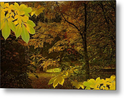 Metal Print featuring the photograph Fall Spendor - Series Number Three by Jeff Burgess