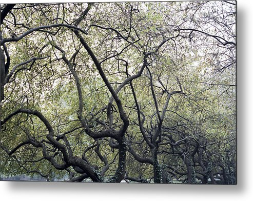 Trees Metal Print featuring the photograph Fall Trees by Wes Shinn