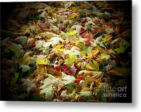 Leaves Metal Print featuring the photograph Fallen Leaves by Marjorie Imbeau