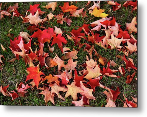 Red Metal Print featuring the photograph Fallen Leaves by Nadia Asfar