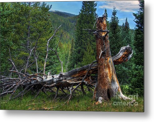 Landscape Metal Print featuring the photograph Fallen Tree by Pete Hellmann