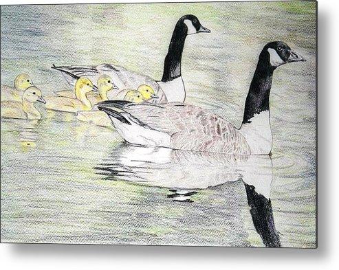 Canadian Geese Metal Print featuring the drawing Family Outing by Debra Sandstrom