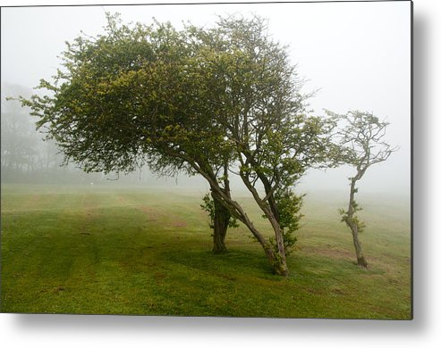 Fog Metal Print featuring the photograph Family Tree by Svetlana Sewell