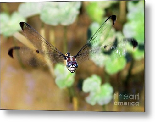 Dragonfly Metal Print featuring the photograph Female Dragonfly by Art Cole