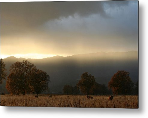 Country Metal Print featuring the photograph Fields Of Gold by Holly Ethan