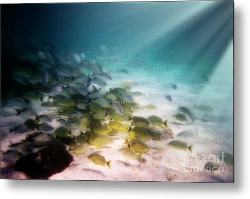 Fish School Metal Print featuring the digital art Fish Swim In The Light by Sven Brogren
