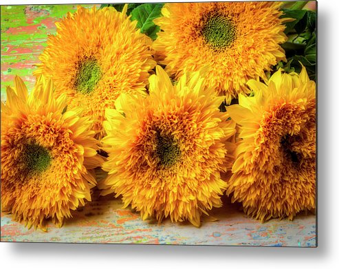Sunflower Metal Print featuring the photograph Five Exotic Sunflowers by Garry Gay