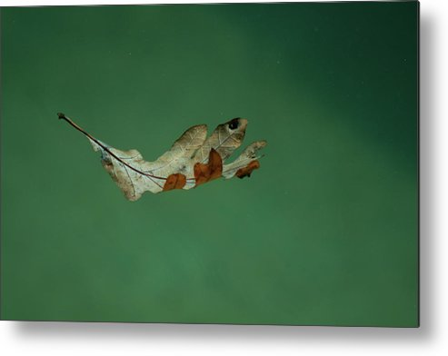 Alone Metal Print featuring the photograph Floating by Craig Hosterman