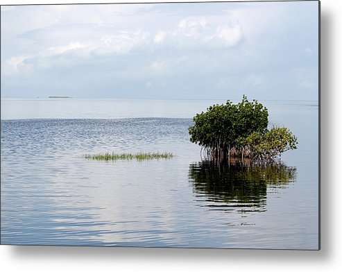 Mangroves Metal Print featuring the photograph Floating Island by Theresa Willingham
