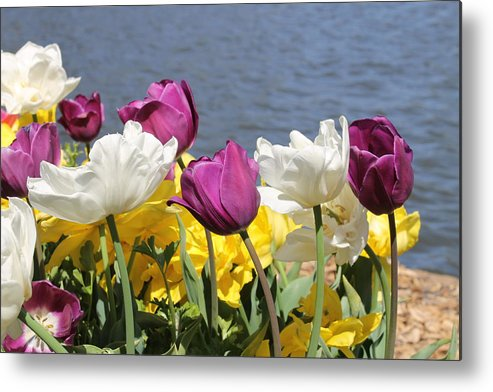 Flowers Metal Print featuring the photograph Floriade 9 by Anthony Croke