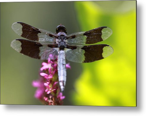 Dragonfly Metal Print featuring the photograph Flower Dancer by Paul Slebodnick