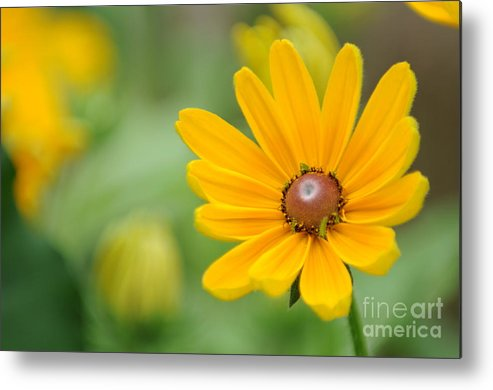 Yellow Metal Print featuring the photograph Flower by Miguel Celis