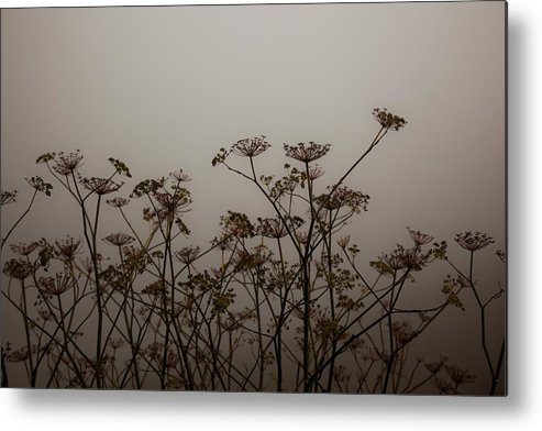California Metal Print featuring the photograph Flowers In California Fog by Patrick Flynn
