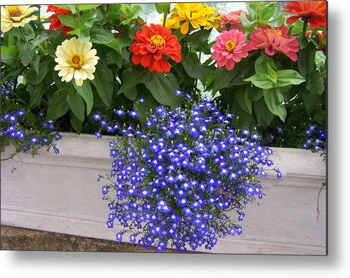 Flowers Metal Print featuring the photograph Flowers Of Blue by Chuck Shafer