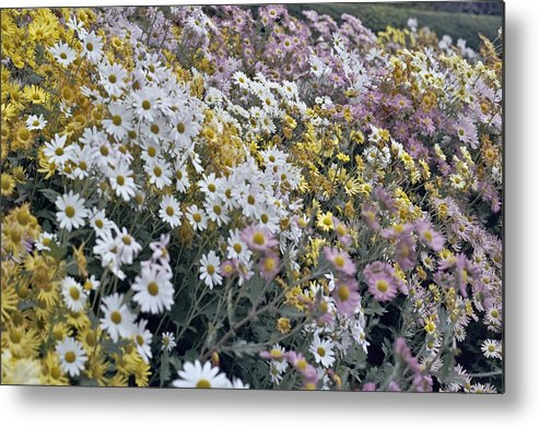 Flowers In Fall Metal Print featuring the photograph Flowers by Wes Shinn