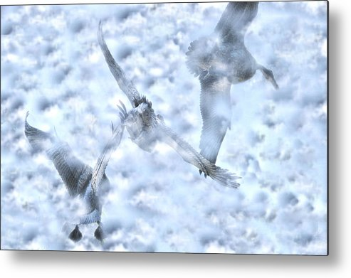 Flying Metal Print featuring the photograph Flying Blind by Dennis Sullivan
