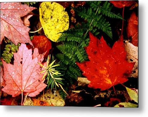 Foliage Metal Print featuring the photograph Foliage Closeup by Roger Soule