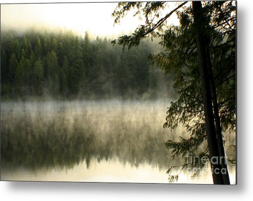 Fog Metal Print featuring the photograph Forest And Fog by Idaho Scenic Images Linda Lantzy