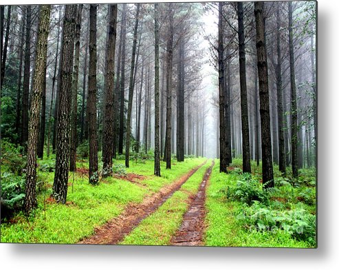 Green Metal Print featuring the photograph Forest Drive by Dirk Brink