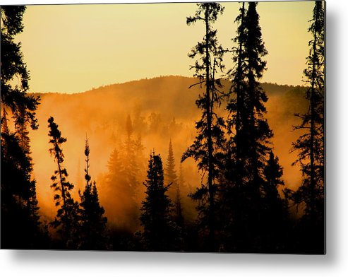 Photography Metal Print featuring the photograph Forest Glow by Joi Electa