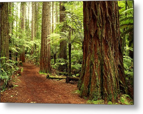 Hiking Trail Metal Print featuring the photograph Forest by Les Cunliffe