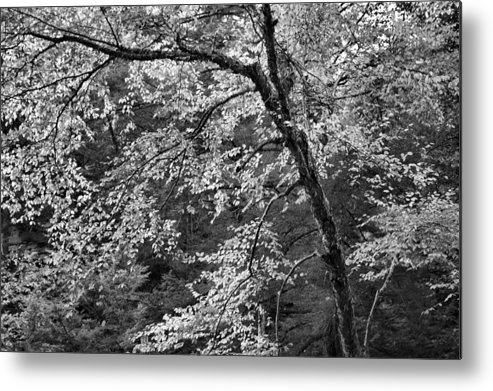 Forest Metal Print featuring the photograph Forest Light by Stephen Vecchiotti