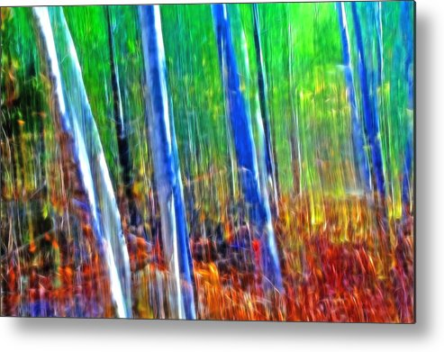 Forest Metal Print featuring the photograph Forest Magic by Bill Morgenstern