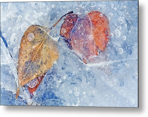 Ice Metal Print featuring the photograph Fractured Seasons by Mike Dawson