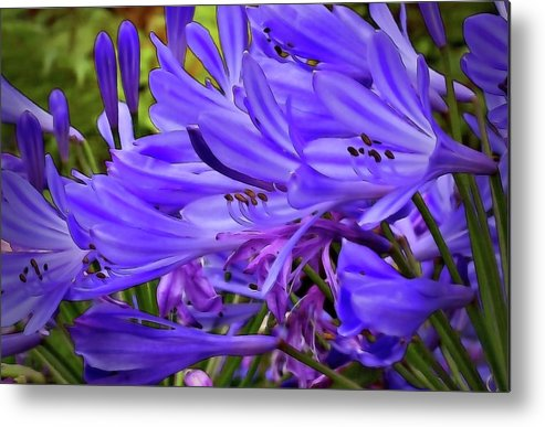Purple Metal Print featuring the photograph From Beginning To End by ShaddowCat Arts - Sherry