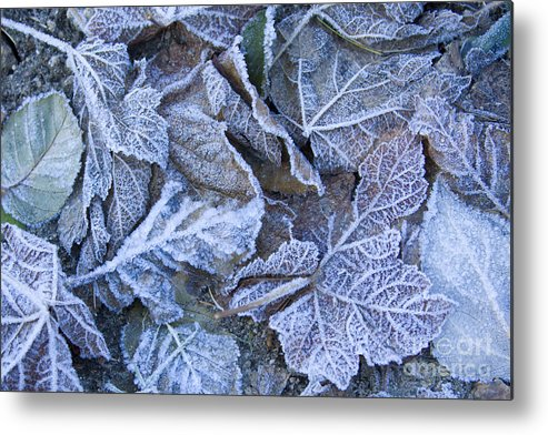 Frost Metal Print featuring the photograph Frost by Idaho Scenic Images Linda Lantzy
