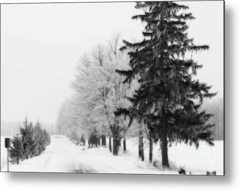 Trees Metal Print featuring the photograph Getting Bigger by Cathy Beharriell