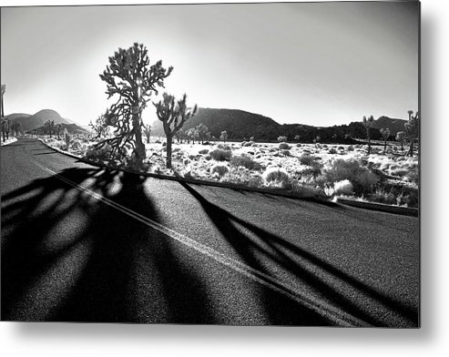 Joshua Tree Metal Print featuring the photograph Ghouls by Laurie Search