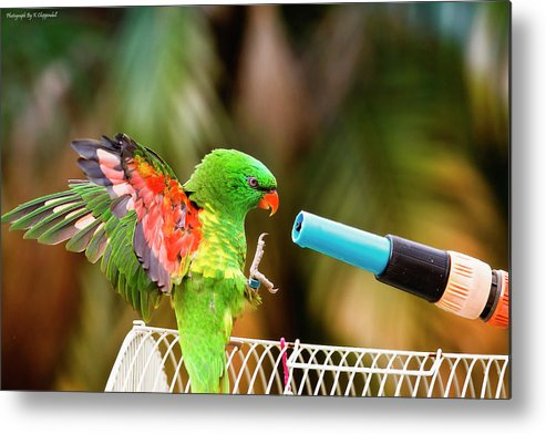 Wildlife Photography Metal Print featuring the photograph Go A Head Make My Day 01 by Kevin Chippindall