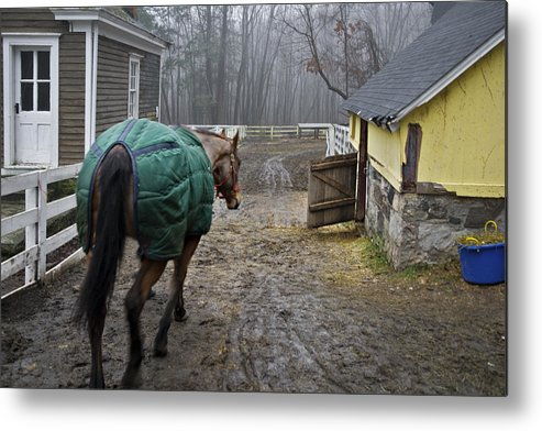 Horse Metal Print featuring the photograph Going Home by Jack Goldberg