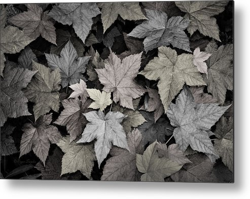 Beautiful Photos Metal Print featuring the photograph Gold Copper And Silver Leaves 1 by Roger Snyder