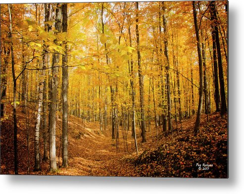 Autumn Forest Metal Print featuring the photograph Golden Glory by Peg Runyan