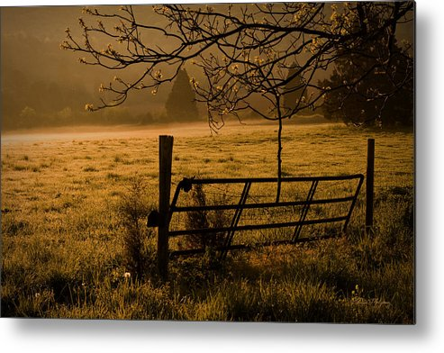 Cave Spring Metal Print featuring the photograph Golden Glow by Patricia Montgomery