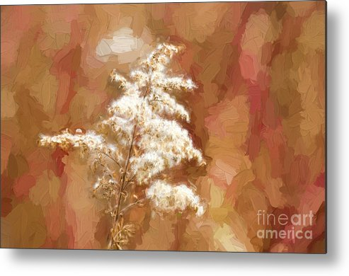 Goldenrod Metal Print featuring the photograph Goldenrod Plant In Fall by Les Palenik