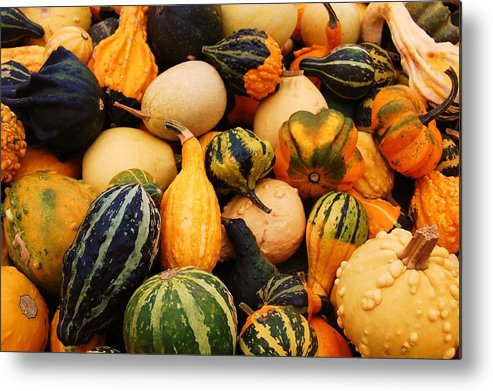 Squash Metal Print featuring the photograph Gourds by Jame Hayes