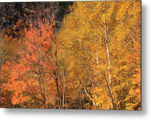 Grafton Notch State Park Metal Print featuring the photograph Grafton Notch Foliage by John Burk