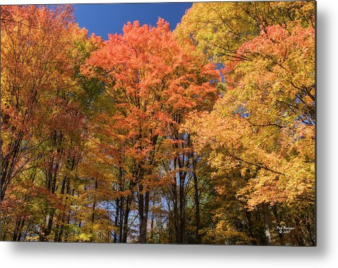 Fall Metal Print featuring the photograph Grandma Red's Woods by Peg Runyan