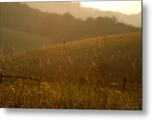 Sunset Metal Print featuring the photograph Grass And Sunshine by Mark Wagoner