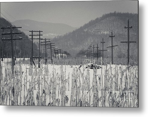 Cloudy Metal Print featuring the photograph Gray Day by Lyudmila Prokopenko