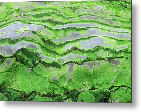Horizontal Metal Print featuring the photograph Green Algae Patterns On Exposed Rock At Low Tide, Gros Morne National Park, Ontario, Canada by Altrendo Nature