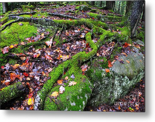 Tree Roots Metal Print featuring the photograph Green And Serene by Thomas R Fletcher