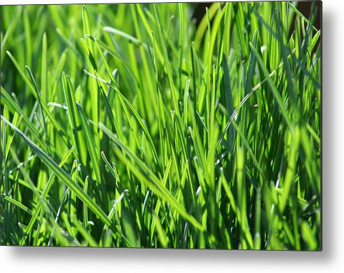 Green Metal Print featuring the photograph Green Grass by JoJo Photography